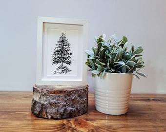 Single Pine Tree-Black and White