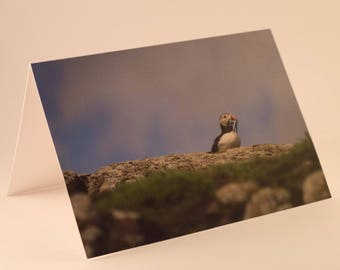 Puffin Greeting Card (pack of 10)