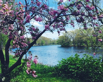 Cherry blossoms by the Charles | Boston, MA - FREE SHIPPING!