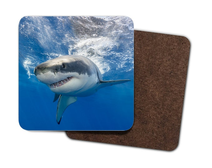 Set of 4 Shark Coasters