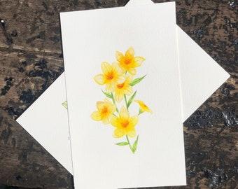 Original Botanical Illustrations