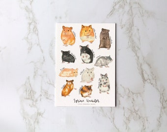 Syrian Hamster A6 and A5 Postcard Print, Different colours of Syrian Hamster