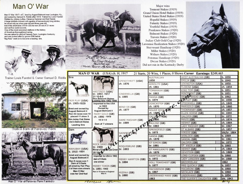 Man O' War Picture Pedigree Chart Ready to frame Christmas Gift Idea fits  into 11 by 14 ot 8 by 11