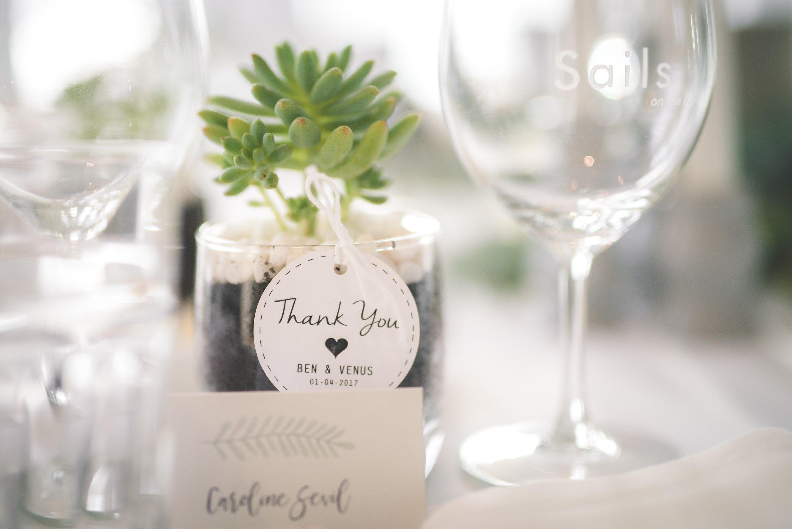 Succulent Wedding Favors / Bomboniere