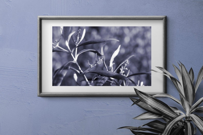 Baby Olives in Violet Sunset  Printable  High Resolution image 0