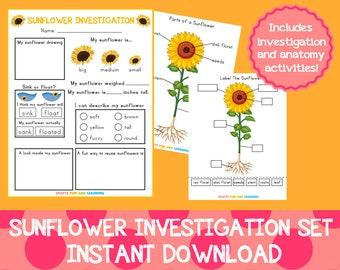 Sunflower Investigation Set
