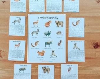 Woodland Animal Poster and Flashcard Set, Woodland Animal Unit Study