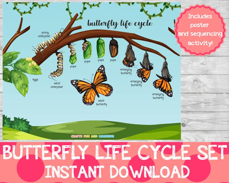 Butterfly Life Cycle Set Memory Game Butterfly Activity image 0