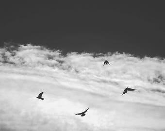 La danza del pájaro
