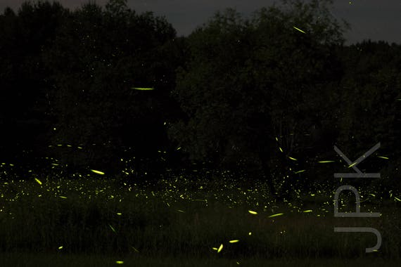 Lightning Bugs 2016 #2, Western Massachusetts