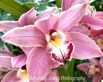 Omnipresent Orchid