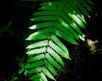 Luminescent Fern