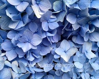 Blue Hydrangea Bliss