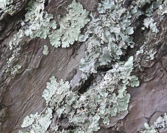 Lichen Botanical Photography - Wall Art Print *SUPPLIED WITHOUT FRAME*