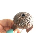 Cuff Bracelet Sea Urchin  - Statement Jewelry Nature Inspired - Electroformed Marine Nautical Ocean Beach Mermaid