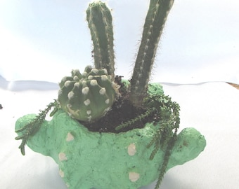 Cactus of The Month Club