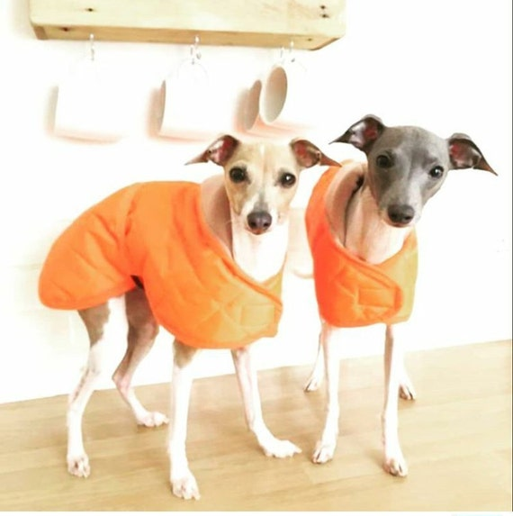 Sherpa fleece lined Italian greyhound waterproof coat with matching belt made bespoke up to  18 length
