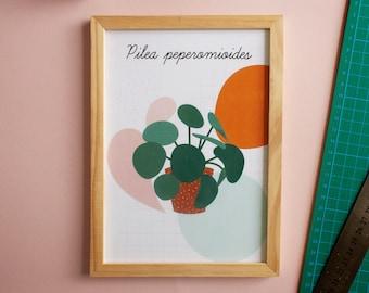 Small plant poster A5- Plant advice sheet - Aloe Vera, Cactus, Pilea, Monstera Deliciosa, Sansievera