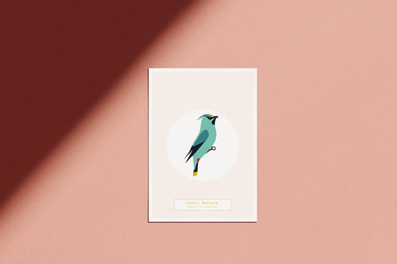 Poster The Bird Room  The Boréal Jaseur  illustrated pink image 0