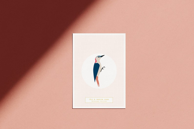 Poster The Bird Room  The Red-bellied Peak  illustrated pink image 0