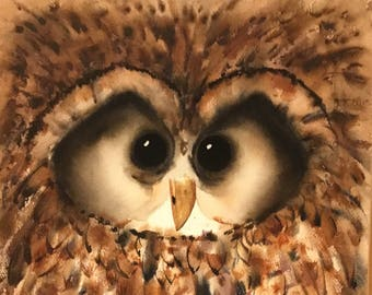 Barred Owl Vintage Original Watercolor Painting