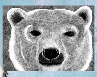 Bear  //  Animals Polar Brown Grizzly Black Bear White Illustration Close Up Digital Art Gift Wild Kids Adults Wildlife Home Gallery Decor