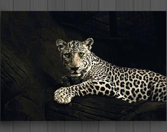 White Leopard canvas art wall decor & Leopard wall decor | Etsy