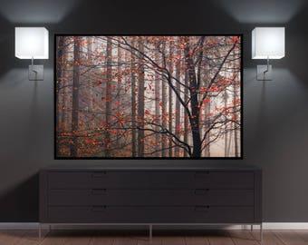 Fall Trees Canvas Wall Decor