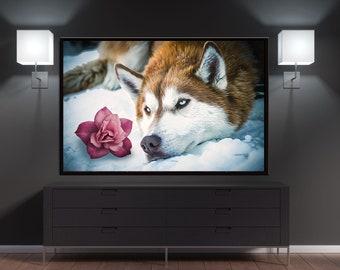 Winter Husky and A Pink Flower Canvas Wall Art Decor