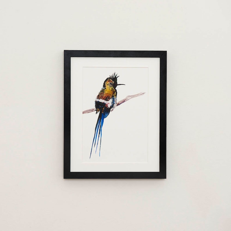 Wire Crested Thorntail Hummingbird Illustration Print image 0