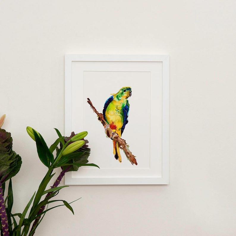 Orange Bellied Parrot Illustration image 0