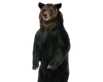 Brown Bear Life-Size Cardboard Cutout