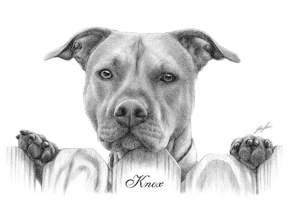 pencil drawing,pet drawing pencil portrait from a photo. dog, cat. etc pet portrait drawing Custom portrait