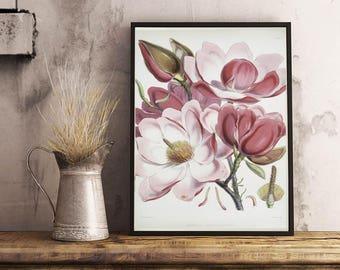 Magnolia Campbellii, art print, botanic print