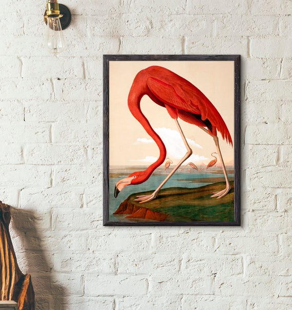 THE AMERICAN PINK FLAMINGO BIRD JOHN J AUDUBON PAINTING ART REAL CANVAS PRINT