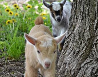 Acqua di Gio Goat Milk Soap