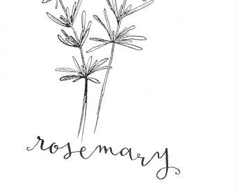 Rosemary Ink Illustration