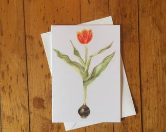 Tulip with Bulb Blank Greeting Card