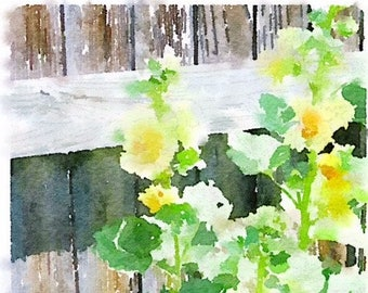 Yellow Hollyhocks