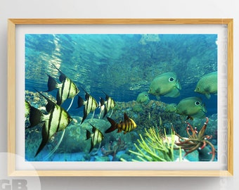 CORAL Reef Print Beautiful Coral PRINTABLE ART Tropical Fish Ocean PrintReef Art Scuba Wall