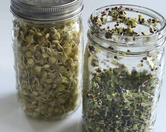 Sprouting Kit - Broccoli Sprouts