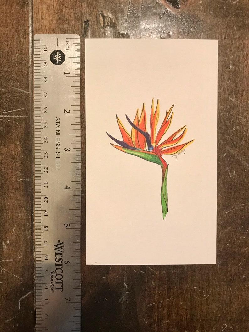 Bird of Paradise Handmade Illustration