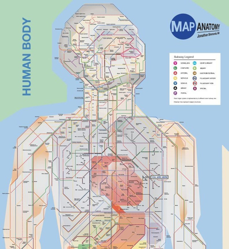 Poster Nyc Style Map Of The Entire Human Body A Schematic Etsy