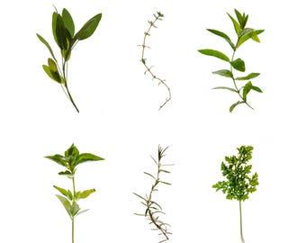 Herbs, photographic print