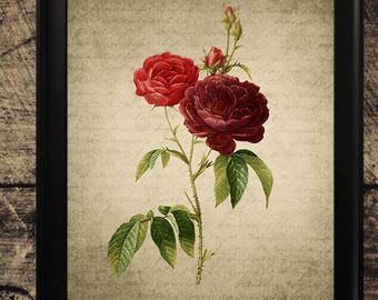 Vintage rose wall art, home decor, rose print, vintage wall art, rose flower art, printable rose, instant download