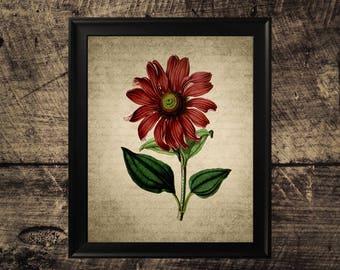 Vintage Coneflower print, flower decor, vintage botanical wall art,  flower print