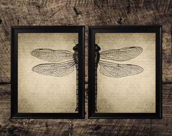 Libelle Jahrgang Druck, Libelle Kunst, Flügel, Libelle druckbare Kunst, Kunst, Libelle-Wand-Dekor