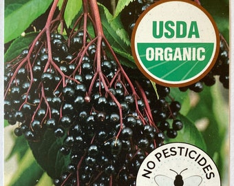"""Organic Elderberry Plant Free Priority Shipping 12 to 18"""" tall in 4.5"""" pot- Live Plant - Chemical-free USDA certified Non-GMO Plant"""