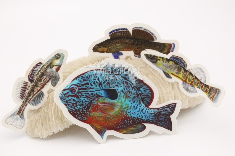 Clear Vinyl North American Native Fish Stickers