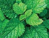 Lemon Balm Melissa officinalis Herbal Glycerite Anti-Stress Anti-Anxiety Antiviral Antibacterial Alcohol-Free Extract